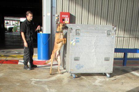 Inspection canine du service des Douanes, aéroport de Nice